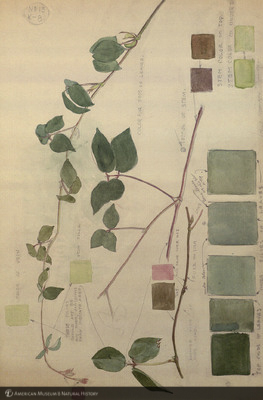http://lbry-web-002.amnh.org/san/mo_exhibition/art002_b2_07a.jpg