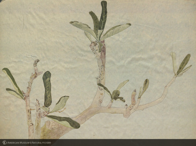 http://lbry-web-002.amnh.org/san/mo_exhibition/art002_b2_15.jpg