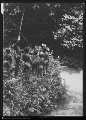 http://lbry-web-002.amnh.org/san/to_upload/Beck-PapuaNewGuinea/NG-5x7-negs/115714.jpg