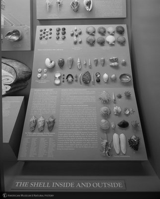 http://images.library.amnh.org/d/t/8x10/0001/00336503_l.jpg