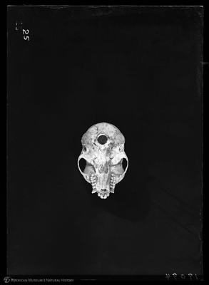 http://lbry-web-002.amnh.org/san/to_upload/5x7/19094.jpg