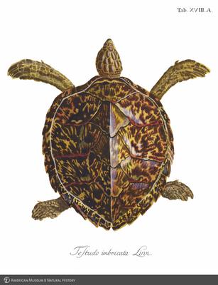http://lbry-web-002.amnh.org/san/to_upload/opulentoceans/b1064426.jpg