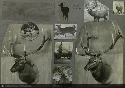 http://lbry-web-002.amnh.org/san/mo_exhibition/ppc_533_b09_f184_003.jpg