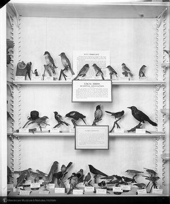 http://images.library.amnh.org/d/t/8x10/0001/00039638_l.jpg