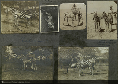 http://lbry-web-002.amnh.org/san/mo_exhibition/ppc_533_b05_f091_008.jpg