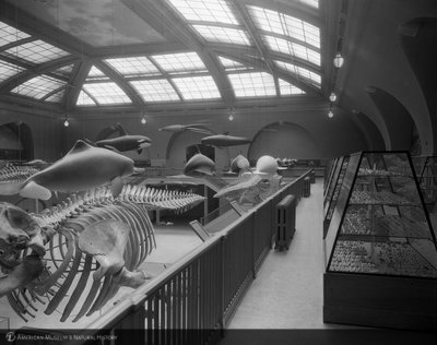 http://images.library.amnh.org/d/t/8x10/0001/00314190_l.jpg