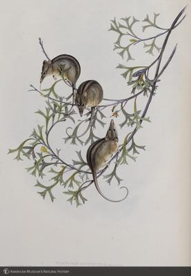 http://lbry-web-002.amnh.org/san/naturalhistories/b10303133_2.jpg