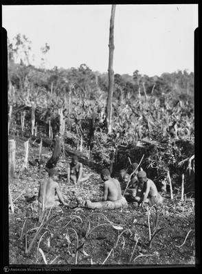 http://lbry-web-002.amnh.org/san/to_upload/Beck-PapuaNewGuinea/NG-5x7-negs/115569.jpg
