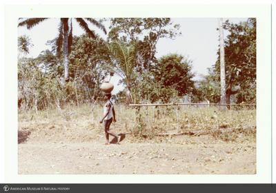 http://lbry-web-002.amnh.org/san/photoprintcollections/Arth/ppc-a78-100213268-17.jpg