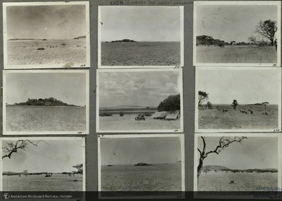 http://lbry-web-002.amnh.org/san/mo_exhibition/ppc_533_b02_f053_003.jpg