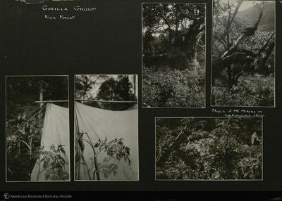 http://lbry-web-002.amnh.org/san/mo_exhibition/ppc_533_b11_f242_004.jpg