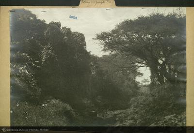 http://lbry-web-002.amnh.org/san/mo_exhibition/ppc_532_b25_f229_009.jpg