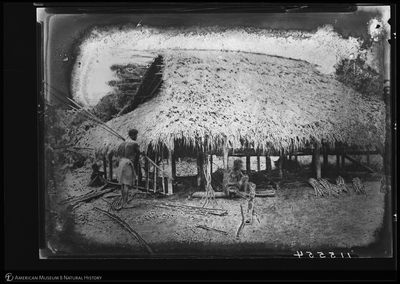 http://lbry-web-002.amnh.org/san/to_upload/Beck-PapuaNewGuinea/NG-5x7-negs/115554.jpg