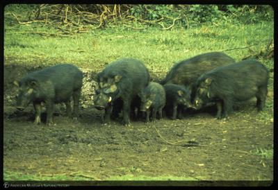 http://lbry-web-002.amnh.org/san/35mm/K13730.jpg