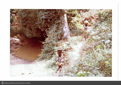 http://lbry-web-002.amnh.org/san/photoprintcollections/Arth/ppc-a78-100213279-18.jpg