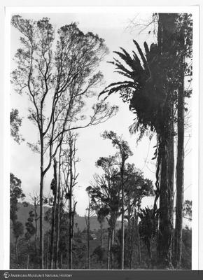 http://lbry-web-002.amnh.org/san/to_upload/Beck-PapuaNewGuinea/NG-5x7-prints/115751.jpg