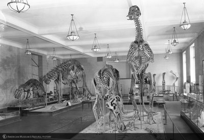 http://images.library.amnh.org/d/t/8x10/0002/00311978_l.jpg
