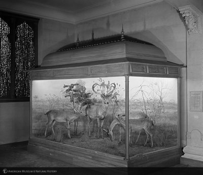 http://images.library.amnh.org/d/t/8x10/0001/00313330_l.jpg