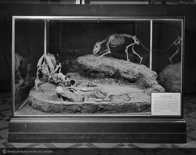 http://images.library.amnh.org/d/t/8x10/0002/00326312_l.jpg