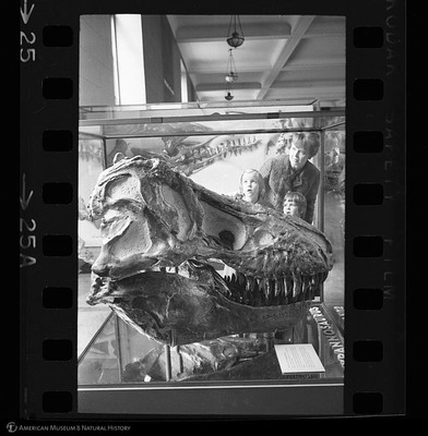 http://lbry-web-002.amnh.org/san/to_upload/35mm_halls_new/600175_25a.jpg