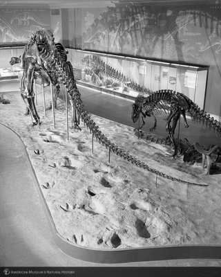 http://images.library.amnh.org/d/t/8x10/0002/00322536_l.jpg