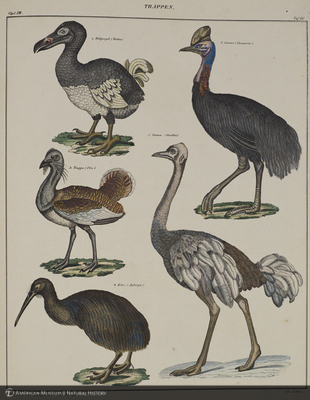 http://lbry-web-002.amnh.org/san/naturalhistories/b11364932_3.jpg