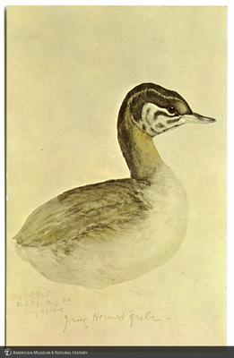 http://lbry-web-002.amnh.org/san/AMNH_postcards/100213323_22.jpg