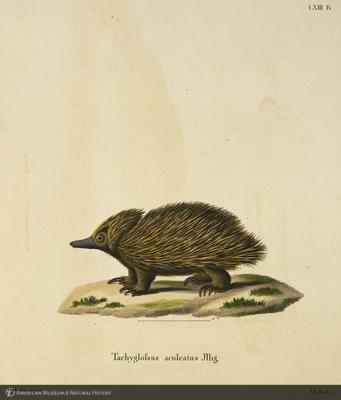 http://lbry-web-002.amnh.org/san/naturalhistories/b10764136_4.jpg