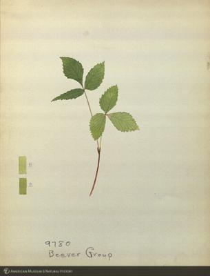 http://lbry-web-002.amnh.org/san/mo_exhibition/art003_b1_04.jpg