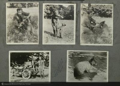 http://lbry-web-002.amnh.org/san/mo_exhibition/ppc_533_b08_f160_012.jpg