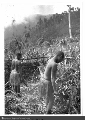 http://lbry-web-002.amnh.org/san/to_upload/Beck-PapuaNewGuinea/NG-5x7-prints/115717.jpg