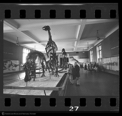 http://lbry-web-002.amnh.org/san/to_upload/35mm_halls_new/602905_27.jpg