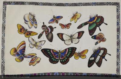 http://lbry-web-002.amnh.org/san/naturalhistories/b11896474_2.jpg