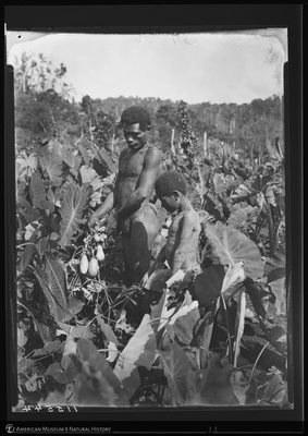 http://lbry-web-002.amnh.org/san/to_upload/Beck-PapuaNewGuinea/NG-5x7-negs/115544.jpg
