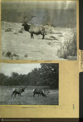 http://lbry-web-002.amnh.org/san/mo_exhibition/ppc_532_b11_f123_054.jpg