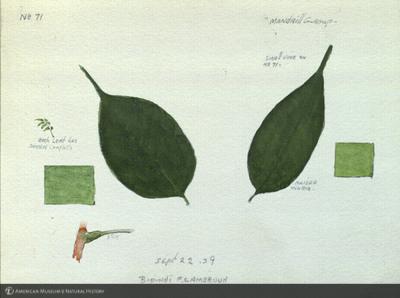 http://lbry-web-002.amnh.org/san/mo_exhibition/art002_b1_41.jpg