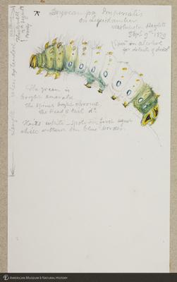 http://lbry-web-002.amnh.org/san/to_upload/titianbutterflies/b1179161_41.jpg