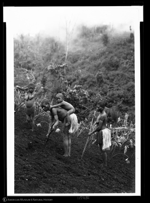 http://lbry-web-002.amnh.org/san/to_upload/Beck-PapuaNewGuinea/NG-5x7-negs/117455.jpg