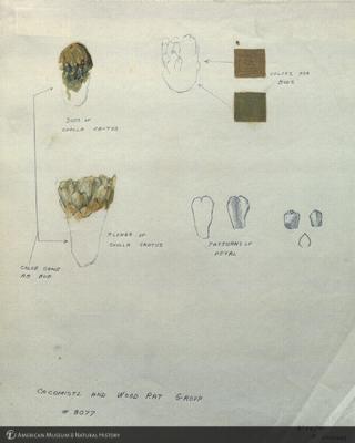 http://lbry-web-002.amnh.org/san/mo_exhibition/art003_b1_23.jpg
