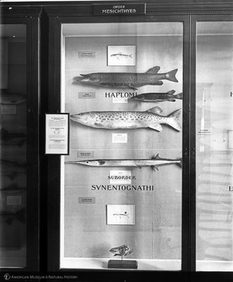 http://images.library.amnh.org/d/t/8x10/0001/00032061_l.jpg