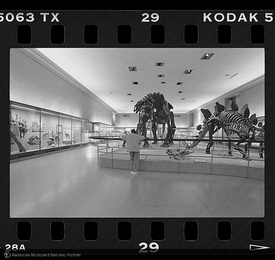 http://lbry-web-002.amnh.org/san/to_upload/35mm_halls_new/600803_29.jpg