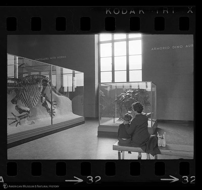 http://lbry-web-002.amnh.org/san/to_upload/35mm_halls_new/602016_32.jpg