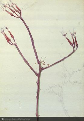 http://lbry-web-002.amnh.org/san/mo_exhibition/art002_b2_05b.jpg