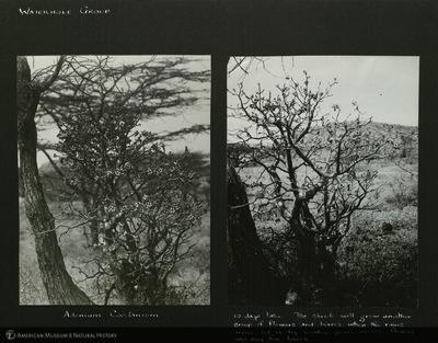http://lbry-web-002.amnh.org/san/mo_exhibition/ppc_533_b12_f267_006.jpg