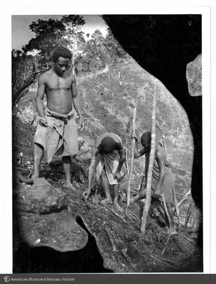 http://lbry-web-002.amnh.org/san/to_upload/Beck-PapuaNewGuinea/NG-5x7-prints/115636.jpg