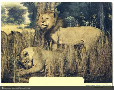 http://lbry-web-002.amnh.org/san/AMNH_postcards/100213323_57.jpg