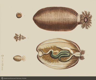 http://lbry-web-002.amnh.org/san/to_upload/opulentoceans/b1136599_5.jpg