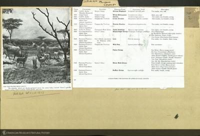 http://lbry-web-002.amnh.org/san/mo_exhibition/ppc_532_b07_f104_037.jpg