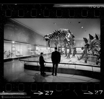 http://lbry-web-002.amnh.org/san/to_upload/35mm_halls_new/602863_27.jpg