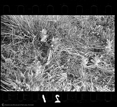 http://lbry-web-002.amnh.org/san/to_upload/35mm/VHC-P021.jpg